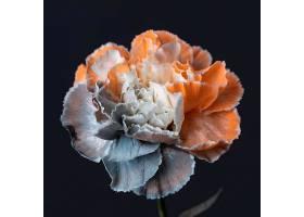 美丽的巨花_1255886401