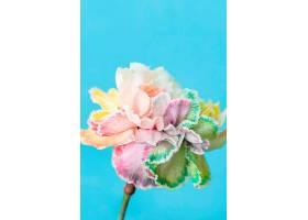 美丽的巨花_1255887101