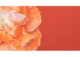 美丽的巨花盛开_1255883301