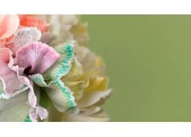 美丽的巨花盛开_1255883701