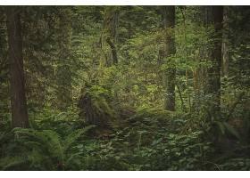 茂密的雨林里长满了植物树木和灌木丛_1120711201