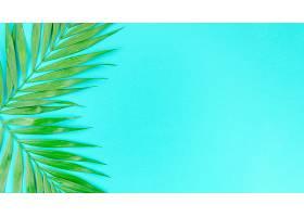 餐桌上的两片绿棕榈叶_422571201