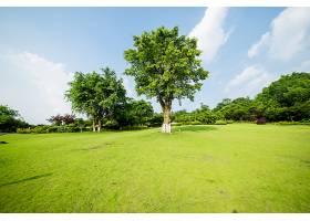 草原景观绿化环境公园背景_114563201