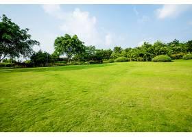 草原景观绿化环境公园背景_114563601