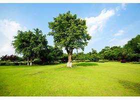 草原景观绿化环境公园背景_114563701