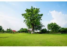 草原景观绿化环境公园背景_114563801