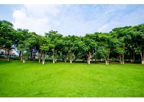 草原景观绿化环境公园背景_114565001