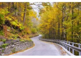 穿过树林的蜿蜒小路_1232805101