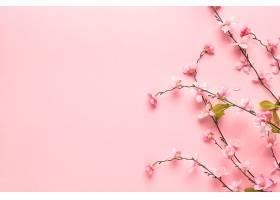 美丽的粉红色小花枝_712356501