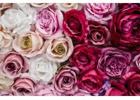 美丽的粉红色红色和白色玫瑰_368028301