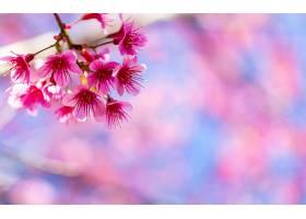 美丽的粉红色花朵_100786701