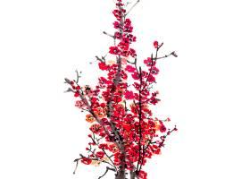 鸟梅传统背景日本季节_120594101