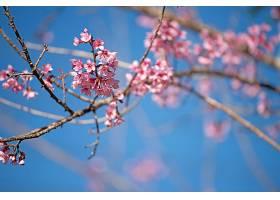 美丽的粉红色花朵背景_392764401