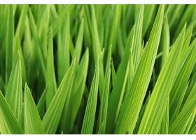 美丽的绿叶和草被晨露覆盖的特写镜头_1039980401