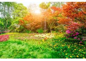美丽的绿色公园_127815101