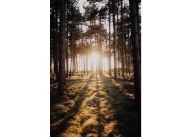 荷兰多姆堡拍摄的一片森林中阳光透过树木_1011981701