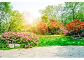 美丽的绿色公园_127815201