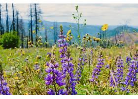 美丽的绿色田野开着淡紫色的花长着瘦小_781476501