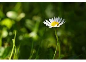 春天到了春天草地上盛开的美丽雏菊抽象_292522701