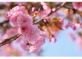 春天到了美丽的花卉春天抽象的大自然背_292521701