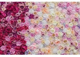 粉红色和红色玫瑰组成的漂亮墙_368029501