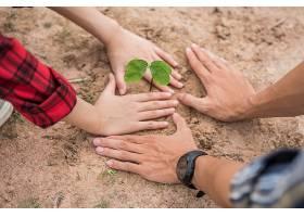 男人和女人帮助种树_897142101