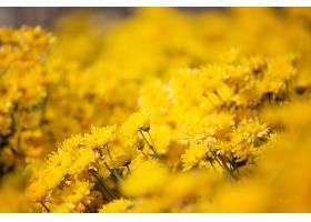 黄色的花朵背景_428405801