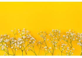 黄色背景上的白色婴儿呼吸之花_386044301