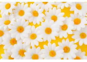 黄色背景上的雏菊特写_379754601