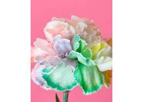 美丽绽放的花朵特写_1255881901