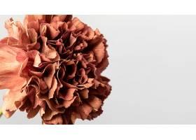 美丽绽放的花朵特写_1255882001