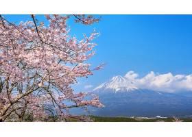 春天的富士山和樱花日本的富士宫_1082446201