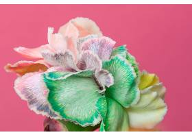 美丽绽放的花朵特写_1255882201