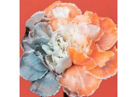 美丽绽放的花朵特写_1255882501