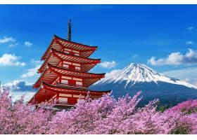 春天的樱花日本的菊花塔和富士山_1082443801