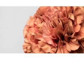 美丽绽放的花朵特写_1255882601