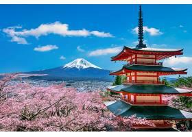 春天的樱花日本的菊花塔和富士山_1082451101