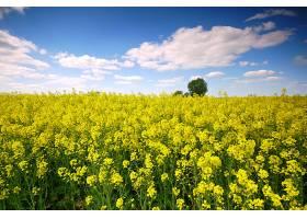 黄花开在云雾缭绕的田野里_94545501