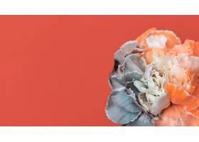 美丽绽放的花朵特写_1255882801