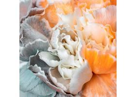 美丽绽放的花朵特写_1255882901