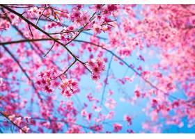 粉红色花枝特写_97873801