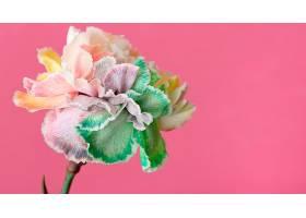 美丽绽放的花朵特写_1255883201