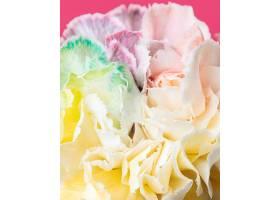 美丽绽放的花朵特写_1255883601