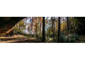 白天森林中树木和植物的水平拍摄_850753801
