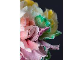 美丽绽放的花朵特写_1255884201