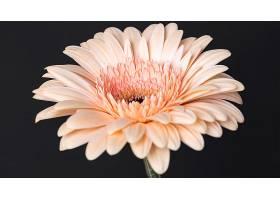 美丽绽放的花朵特写_1255884801