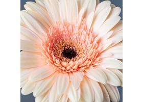美丽绽放的花朵特写_1255885601