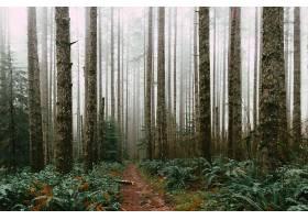 白天茂密的森林和泥泞的小路_1204547801
