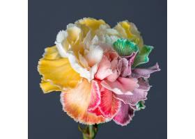 美丽绽放的花朵特写_1255885701