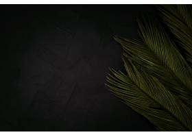 黑色上有漂亮的手掌带有文案空间_486960001
